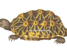 Brown Turtle Illustration – Printable Download - Turtle Clip Art – Stock Images – Tortoise - Nautical Theme - Commercial Use – 300dpi - PNG