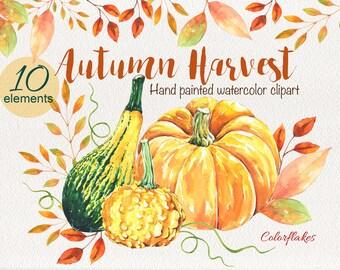 Autumn Harvest - Watercolor  Clipart, Pumpkin, Squash