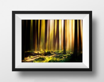 "Summer Forest Wall Art, Photography and Digital Art Print, Magical Woods, Surreal Landscape, Golden Hour | ""Summer"""
