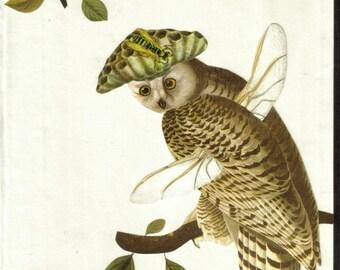 Wasp Owl Illustration, Naturalist Wall Art, Insect Art, Bug Artwork, Natural History Wall Decor, Nature Gift, Original Collage