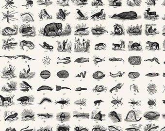 Encyclopedia Terrestria Animalis Neutral Andover 100% Cotton Fabric