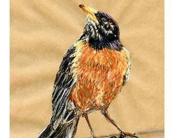 Robin 8X10 9X12 or 11X14 print - Bird Art Pastel Mixed Media Drawing
