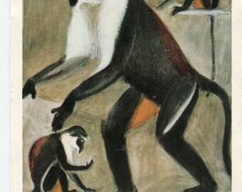 Vintage Monkey postcard - Vintage postcard V. Vatagin  Ape, monkeys, Cercopithecus diana vintage postcard, SharonFosterVintage
