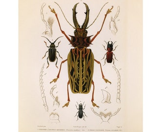 Long Horned Beetle Print Insects Book Plate Sale, Buy 3, get 1 Free