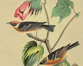 Antique Print, French Flowers Birds 1, Victorian era chart beautiful wall art vintage color lithograph illustration garden