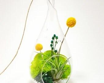 Air Plant Terrarium Kit with Moss, Flowers, Rocks, Green Amethyst / DIY Tillandsia Gift / Wonky Wonderland