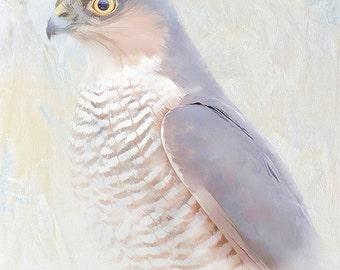sparrow hawk print, bird print, wildlife print, bird wall art, bird photography, wildlife art, bird art, wildlife photography, nature print