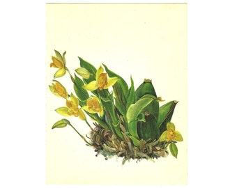 Floral print Botanical Illustration 1960s yellow flowers 8x10