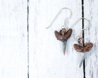 Shark tooth earrings | Shark tooth fossil earrings | Fossil specimen jewelry | Shark tooth dangle earrings
