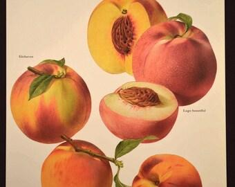 Fruit Wall Art Fruit Decor Kitchen Wall Art Peach Peaches