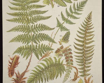 Fern Print Ferns Wall Art Decor Plant Print Nature Print
