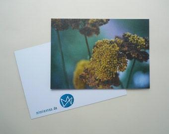 Yarrow, eight postcards, postcards, set, minnievoss, analog photography, offset printing, autumn, once, yarrow, post card
