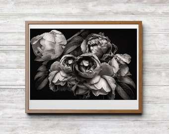The Beauty Within, Download, Photography, Black and White Photography, Flower Nature Photo, Peonies, Fine Art, Home Office Hotel Decor
