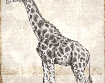 Digital download vintage look giraffe