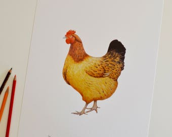 Chicken print | Hen picture | Chicken drawing | Chicken picture | Hen art |