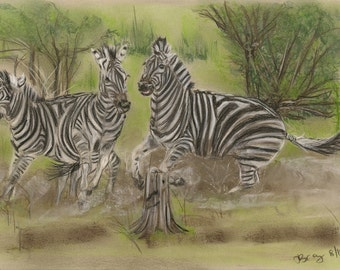 Trouble at the Zebra Crossing