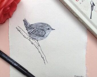 Wren, Original Ink Drawing