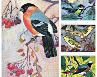 Set of 16. Soviet Postcards. Birds of Russian Forest. Artist Albova. Fine Art. Moscow, 1979