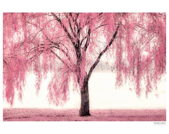 Landscape Photography PRINT, The Pink Willow, Wall Art
