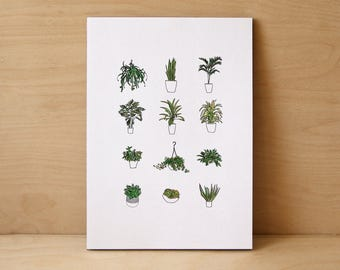 House Plants Limited Edition Print