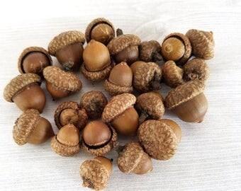 SMALL Real Acorns Natural Acorns Rustic Decor Thanksgiving Decor Table Decor SMALL Acorn Mini Acorn Fall Decor Fall Craft 25 or 50 acorns