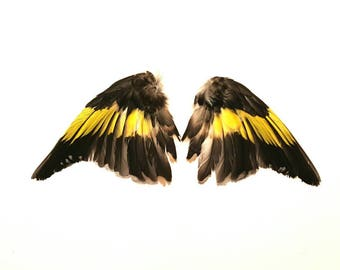 Real stuffed goldfinch wings curiosity tropical feathers mounted taxidermy Black yellow bird finch