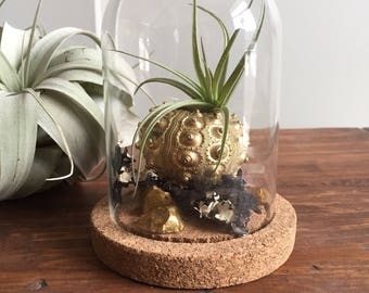Terrarium/bell jar with amethyst geode and air plant