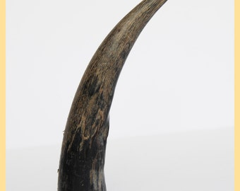 ORIGINAL BUFFALO HORN - Folk Art Collectable, Horn.