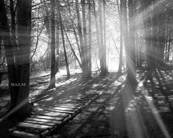 Light through the trees, black & white photo print, wooden bridge, haunting, dreamy photo, Ontario, landscape photography, forest, woodland