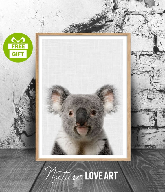 Miroir De Chambre Conforama : Poster Koala, chambre enfant, décoration bébé, photo koala, animal