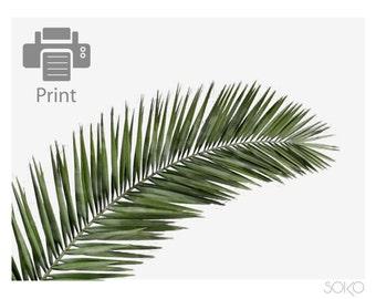 Download poster palm leaf, palm leaf, tropical, Scandinavian, nature