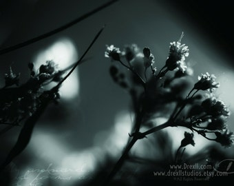 Awesome Blue Sepia, Black and White Botanical Fine Art Photography Print. Exclusive, signed Photographic Wall Art With Small Flowers