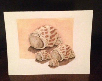 Watercolor note cards, set of 6.  Prints of original artwork. Beautiful Scotch Bonnet shells! Blank inside for your own message.