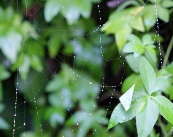 Morning Dew on a Spiders Web