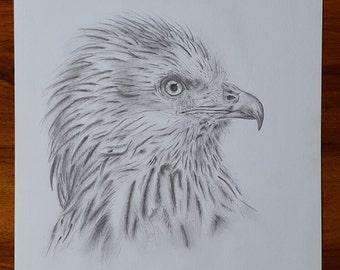 Red Kite pencil drawing, Original / Giclee Print A4, Red Kite Print, Elegant Pencil