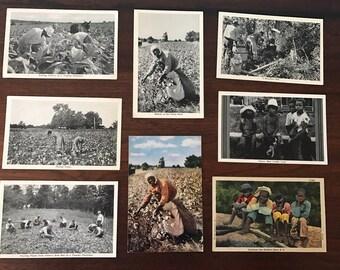 Vintage Scenes of Southern Americana Postcards