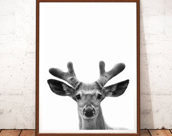 Deer Print, Deer Photo Print, Deer Printable, Instant Download, Animal Print, Deer Wall Art Decor, Black and White, Deer Art, Printable Art