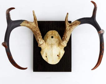 Grey and Bronze Geometric Antler Mount: Painted Real Deer Antlers