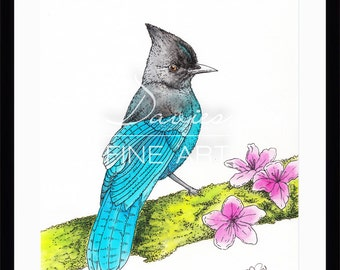 Limited Edition Print of a Steller's Jay Bird - Watercolour and pen (150 Limited Edition Prints)