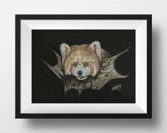 Red Panda Pastel Drawing - Red Panda Print, Red Panda Art Decor Prints, Red Panda Wall Art, Animal Pastel Drawing
