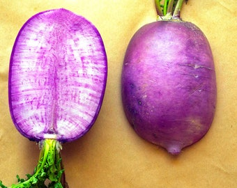 SALE Raphanus sativus Miniature Purple Daikon Radish Organic Rare 20+ Seeds #1147