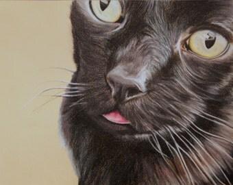 Custom Pencil Crayon Drawing Pet Portrait 8x10