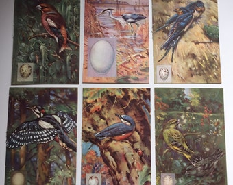 Birds Paper Ephemera Bundle. Scrap paper collage pack for scrapbooking. Ladybird book plates
