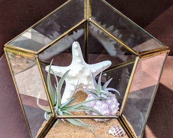Large Diamond Geometric Air Plant Terrarium with Shells and Two Airplants Kit