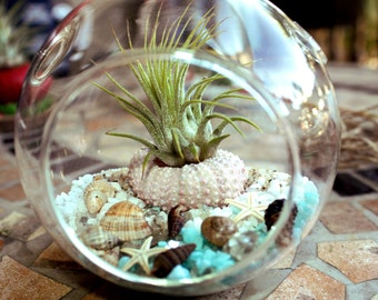 Air Plant Beach Terrarium (Kit) Seashells