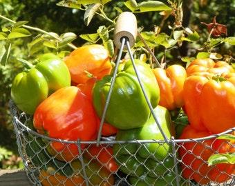 Green Orange Bell Peppers bellpepper California Grown Vegetables Produce Summer Harvest