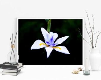 Flower Closeup Print