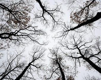 Grey sky with branches of dark trees with leaves, artistic photography decorative.