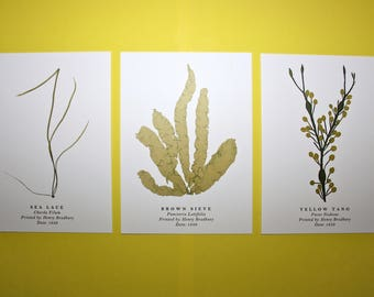 Seaweed Postcards: Set of 3
