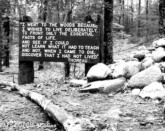 Walden Pond, MA; Thoreau Quote; The Woods; black and white photograph; New England